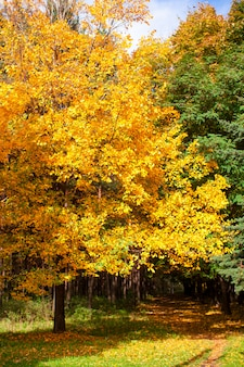 太陽の下で黄色と金色の紅葉と美しい秋の木