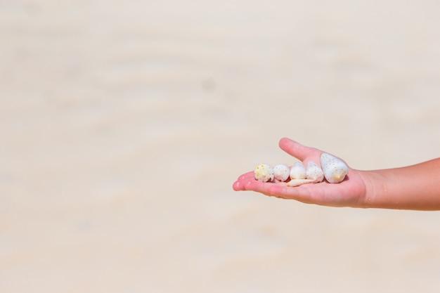 美しい海の貝を持っている小さな女の子の手のクローズアップ