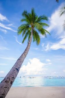 Кокосовая пальма на песчаном пляже голубое небо