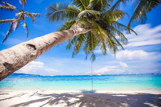 白い砂浜で大きなヤシの木にロープスイング