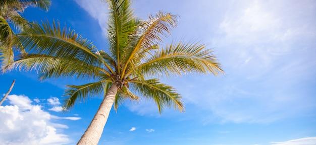 Кокосовая пальма на песчаном пляже фоне голубого неба
