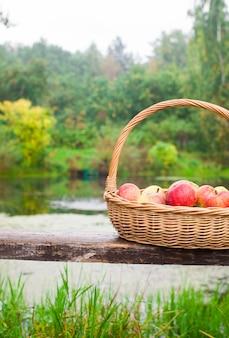 Большая соломенная корзина с красными и желтыми яблоками на скамейке у озера