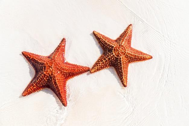Тропический белый песок с красными морскими звездами