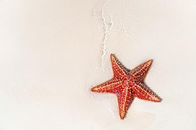 Тропический пляж с морскими звездами