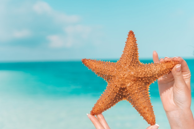 Тропический белый песок с красными морскими звездами в руках у моря