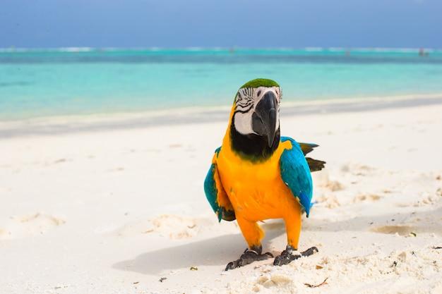 Милый яркий красочный попугай на белом песке на мальдивах