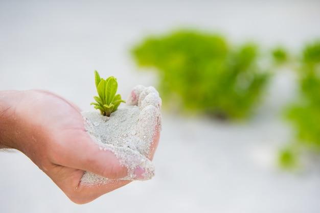 Руки держат зеленый саженец на фоне белого песка