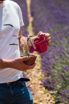 Мужчина стоит посреди лавандового поля, поливает растение в горшке