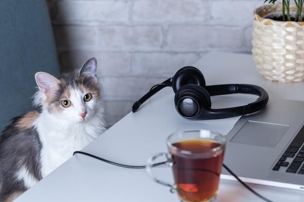 仕事コンセプトの怠惰-ラップトップのホームオフィスのヘッドフォン工場の近くの猫