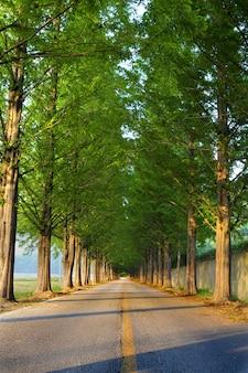 遠近感のある並木道