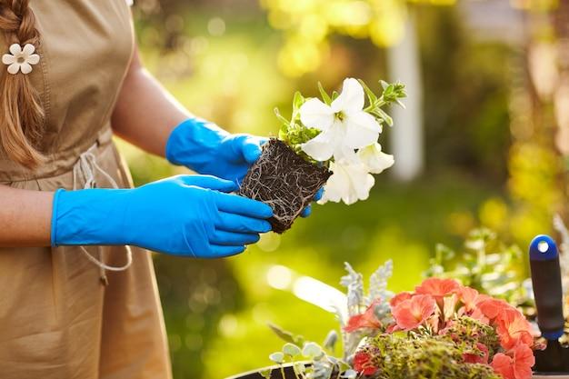 庭に花を移植する少女の手のクローズアップ。