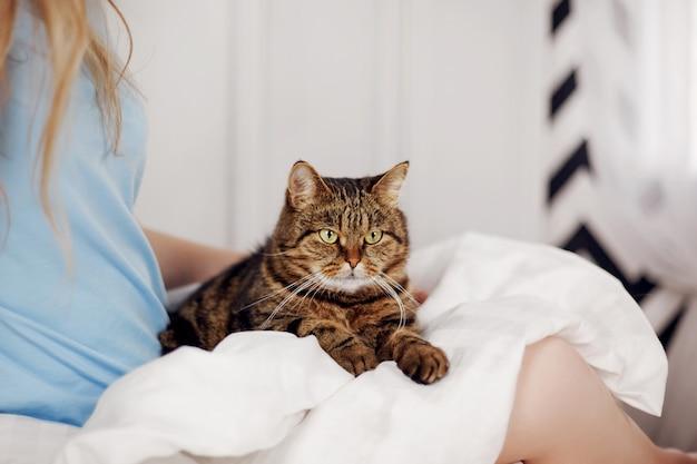 Красивый полосатый кот лежит на коленях женщины