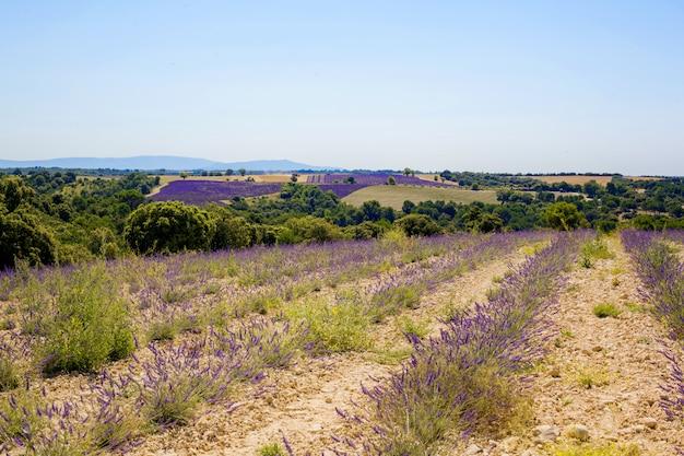 Прекрасный вид на поля лаванды валансоль, прованс, франция