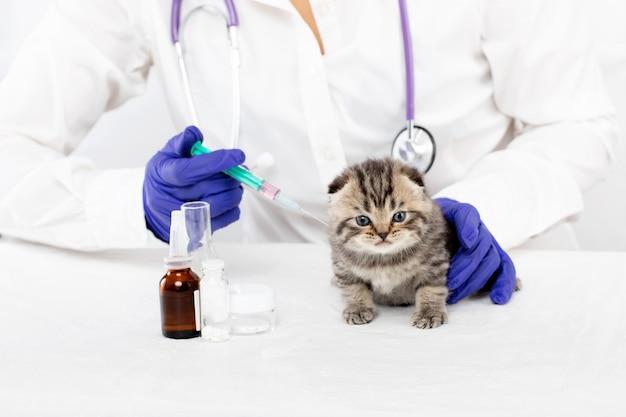 獣医は、獣医クリニックで小さな子猫に注射をします。医学の概念