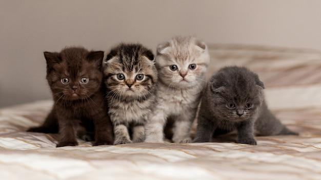Очень милые британские котята красивых окрасов сидят на клетке