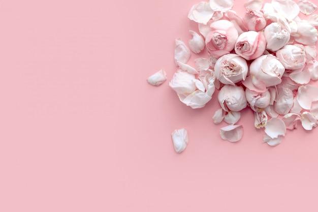 繊細なピンクのバラと花びらのバナーは明るいピンクの背景に横たわる、フラットレイアウト、トップビュー