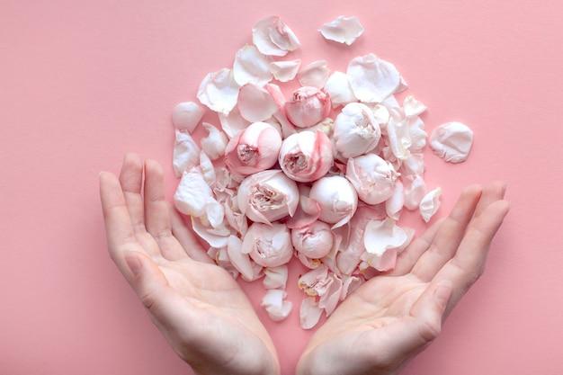 Нежные розовые розы и лепестки лежат в руках девушки