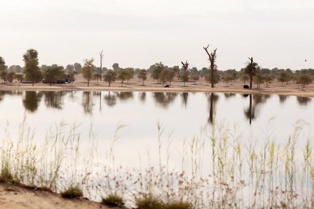 ドバイの公園の砂漠の池
