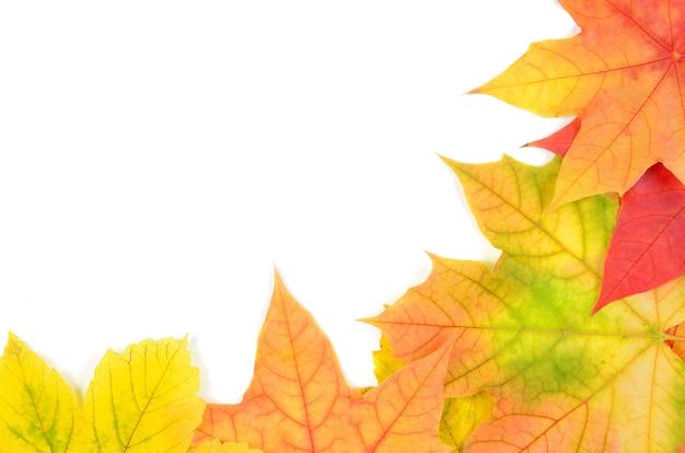 秋の葉の背景