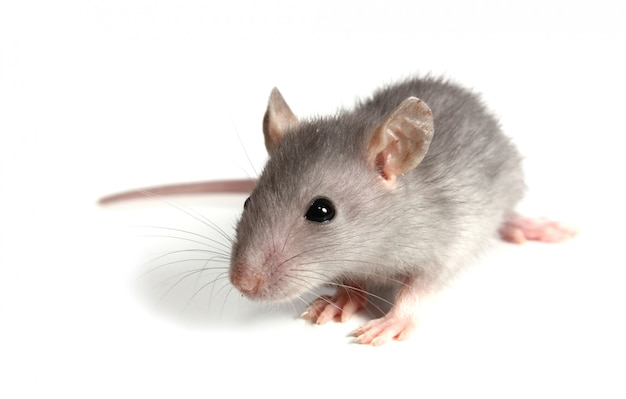灰色のマウス