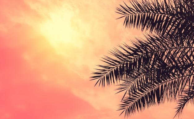 ナツメヤシの木が空に対してクローズアップ