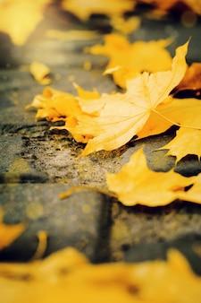 公園の中に黄色い葉