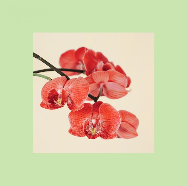 カラフルなフレームを持つ蘭の花