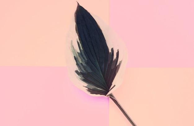 カラフルなパステル調の背景に新鮮なギボウシ葉