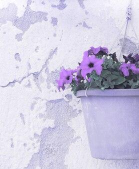 植木鉢のペチュニアの花