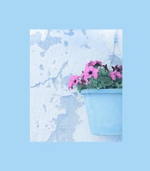 フレームと植木鉢のペチュニアの花