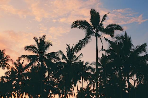 Темные силуэты кокосовых пальм на фоне красочного закатного неба