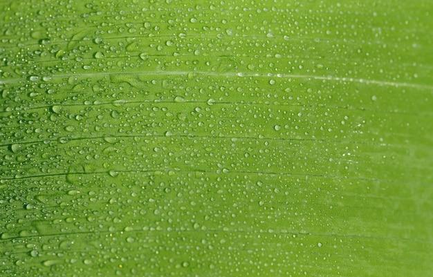 朝露が緑の葉に落ちます。