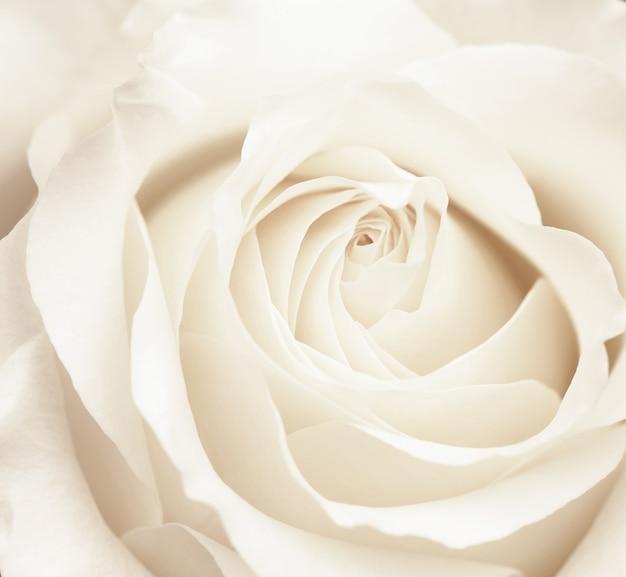 咲くバラの茂みをクローズアップ