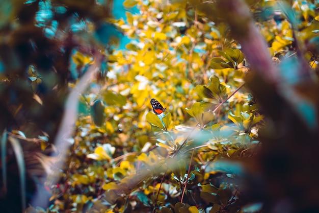 フォレスト、グランジ効果の植物にクローズアップ自然ビュー蝶