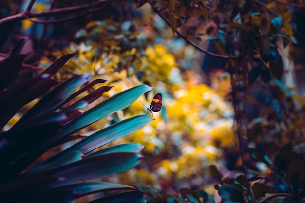 クローズアップ自然ビュー蝶の森の植物