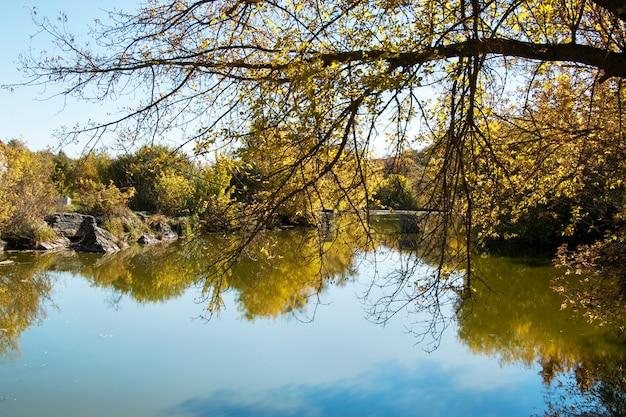 秋の池、黄色の葉