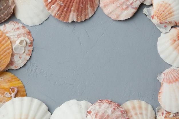 灰色の背景で貝殻