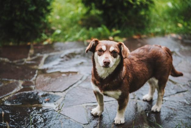 雨の後の外の優しい犬または子犬