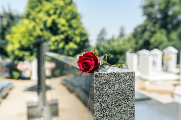 碑石の墓地で薔薇