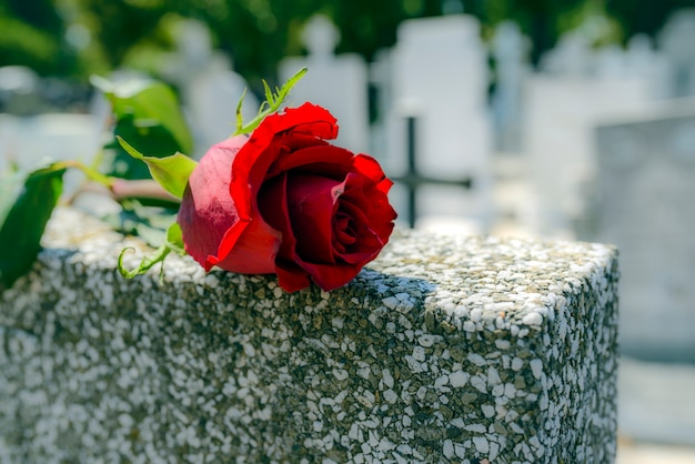 Красная роза была оставлена на могильном камне на кладбище для кого-то, кто скончался.
