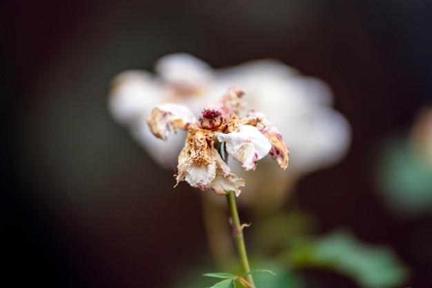 自然の中の死んだ花