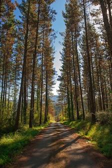 木の森。林道。緑の自然