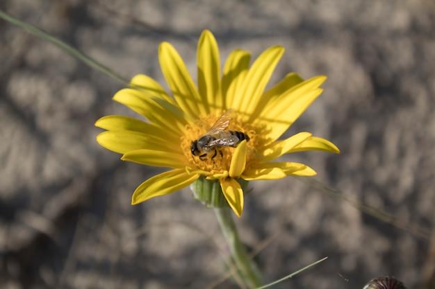 Пчела в желтом цветке