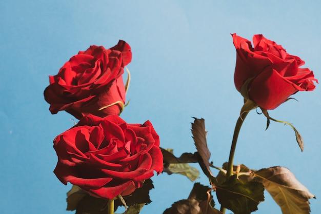 バレンタインの日、または愛について言うための任意の日に鮮やかな赤いバラ