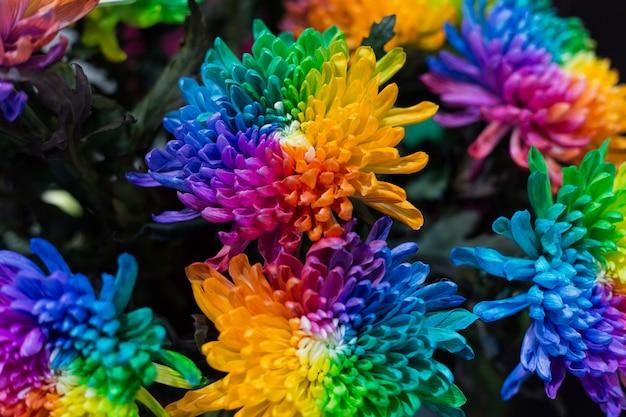 Радужные ромашки хризантемы радужные цветочные букеты