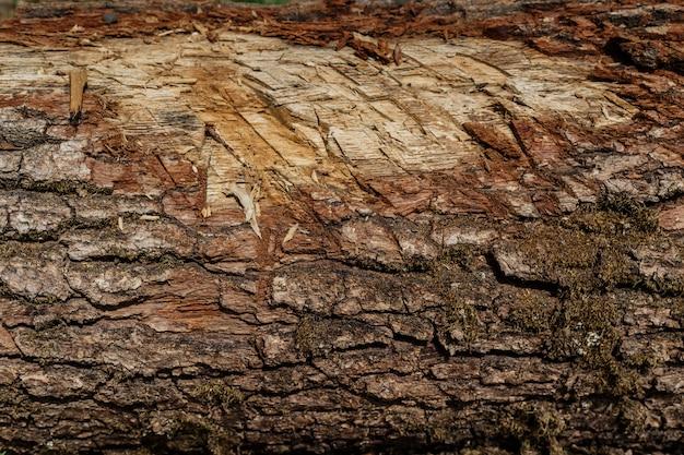 ウッドテクスチャ背景表面の古い自然