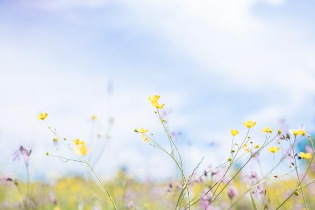 Маленький желтый цветок на синем