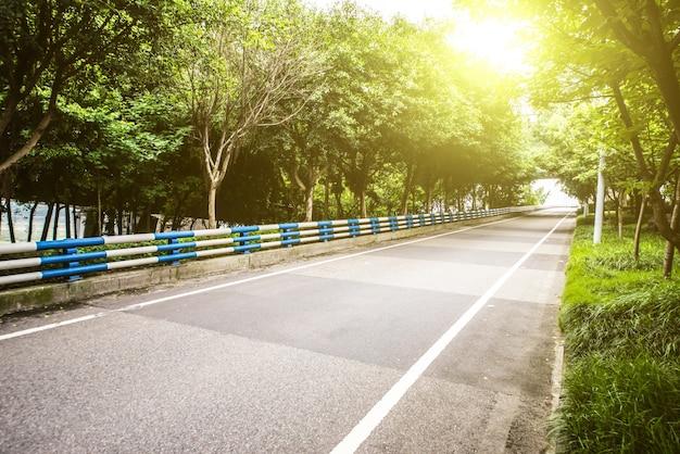 Дорога с лесом