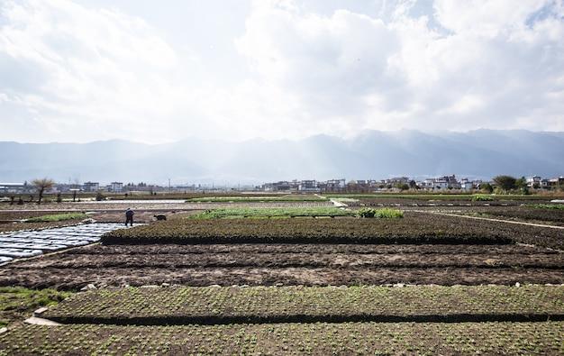Поле сельхозтехника