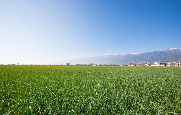 Зеленый пейзаж в ферме